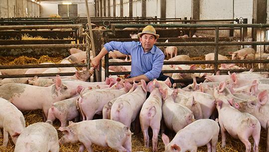 每头母猪每个非生产日的经济损失约2.4美元